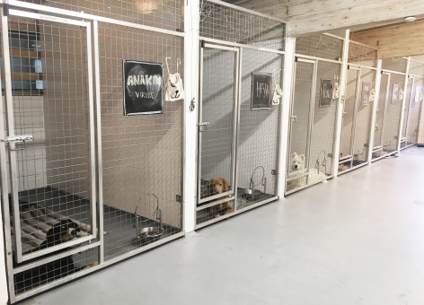 Hoitolayrittäjän lempinäky - hiljainen ja stresittön koirala, asiakkaat rauhallisina mahat täynnä.